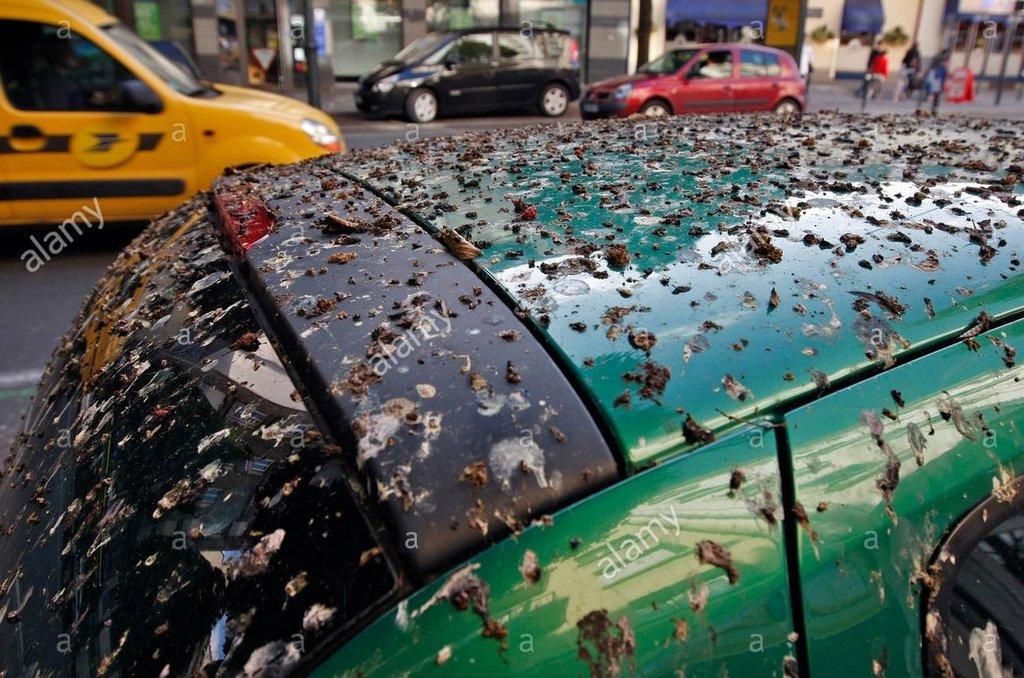 voiture-en-stationnement-couvert-dans-les-fientes-de-pigeons-et-detourneaux-rennes-35-france-bbrc4b.thumb.jpg.b71d775772712833a2cc5cc966ad5da2.jpg