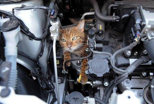 chat-voiture.jpg